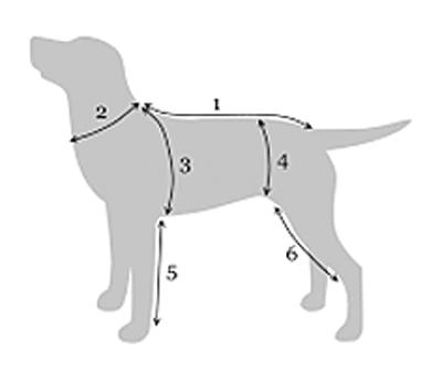hund-grafik