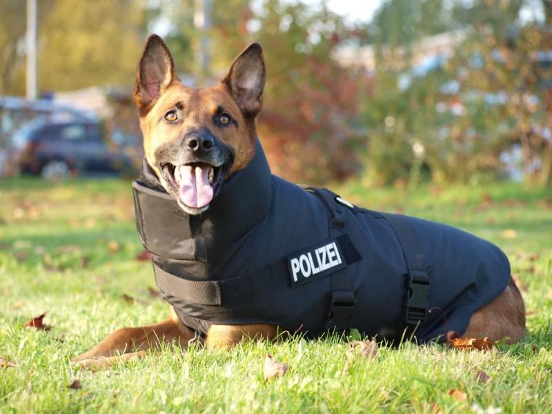 Dog Pretection - das Schutzsystem für Hunde